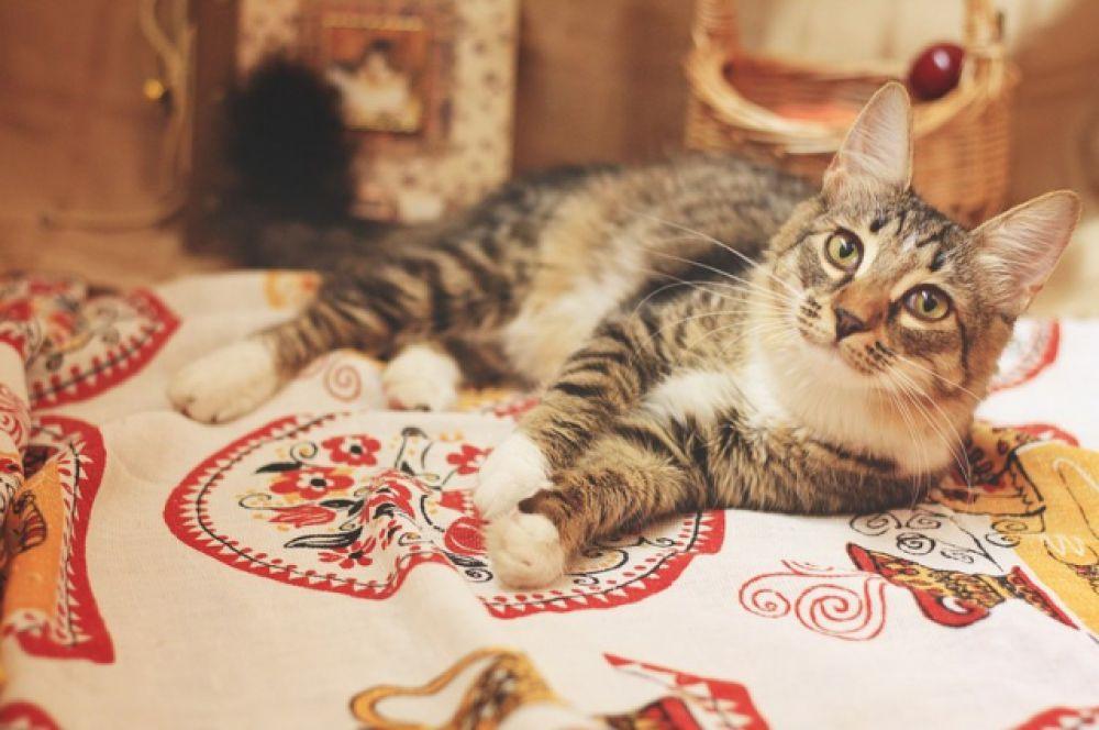 Маленькая пушистая красотка по имени Лунек – очень ласковая мурлыка. Кошка контактная и любознательная. Лоток знает на «отлично». Ищем уютный дом и заботливых родителей. Куратор Наталья. Телефон 8-917-836-29-47.