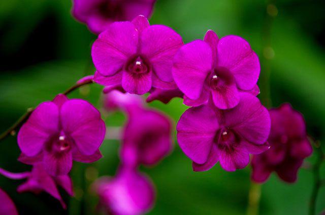 Посетители выставки «Осенний вальс» увидят экзотические орхидеи и хойи.