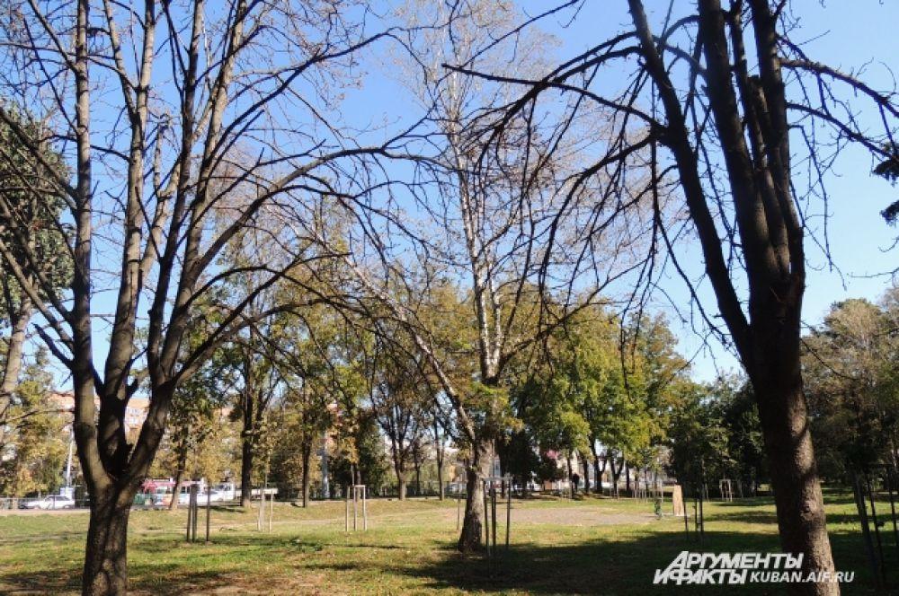 Деревья начали сбрасывать листву.