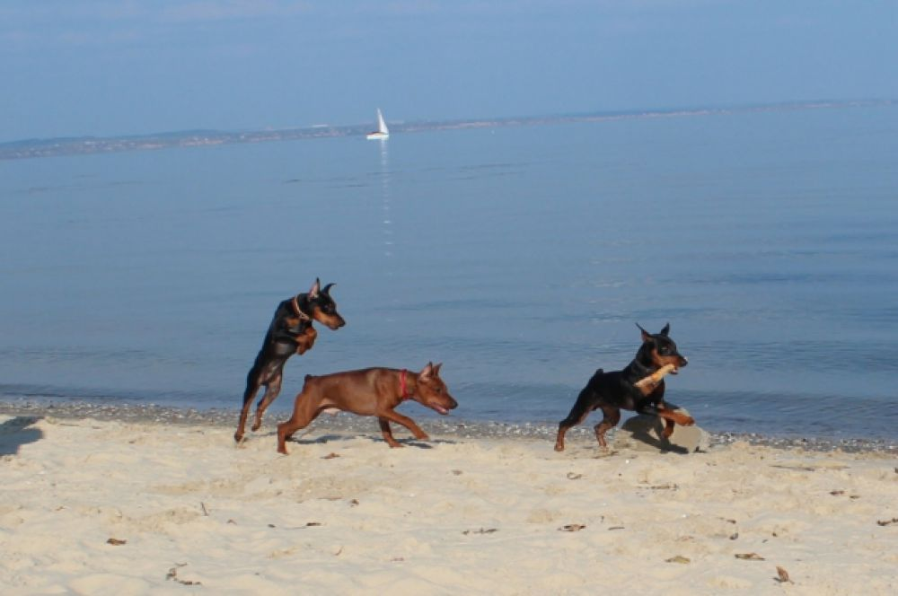 Пляжный сезон. Автор фото Лариса Корсун