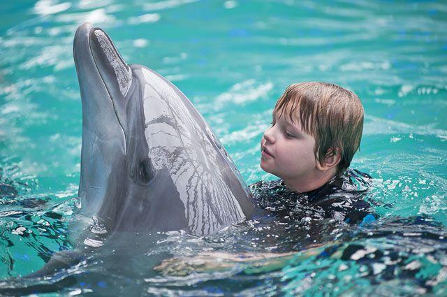Дельфины не только спасают утопающих, но и лечат больных ДЦП и аутизмом деток.