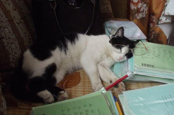 Котик Стразик.