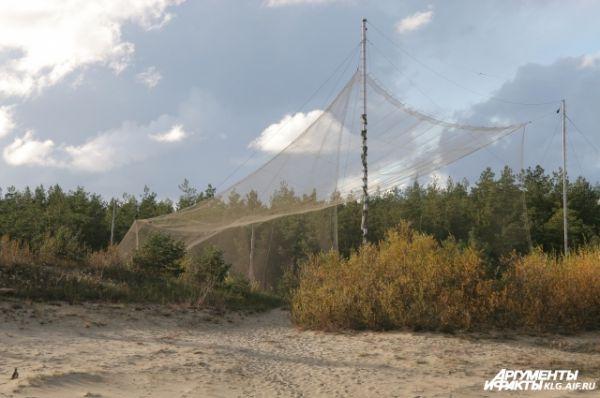 На Косе расположена крупная орнитологическая станция. Она основана в 1901 году профессором И. Тиннеманом. Свое название станция получила в честь птицы зяблика (на латыни «фрингилла»), находясь на пути сезонных миграций различных пернатых.