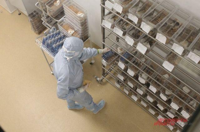 Фаза тестирования препарата на животных - успешно завершилась.