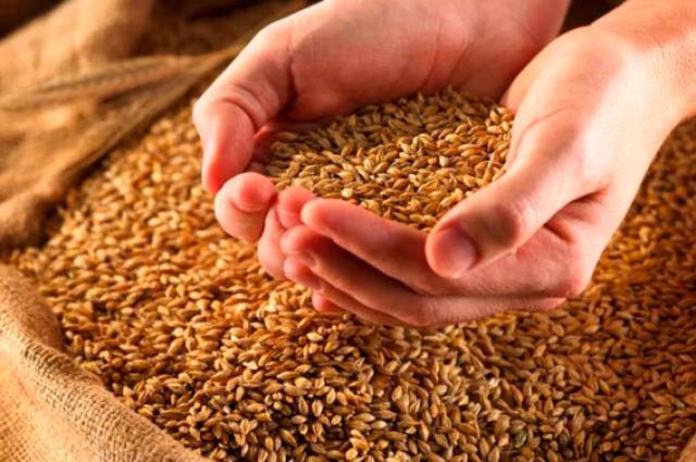 Сбор урожая зерновых культур