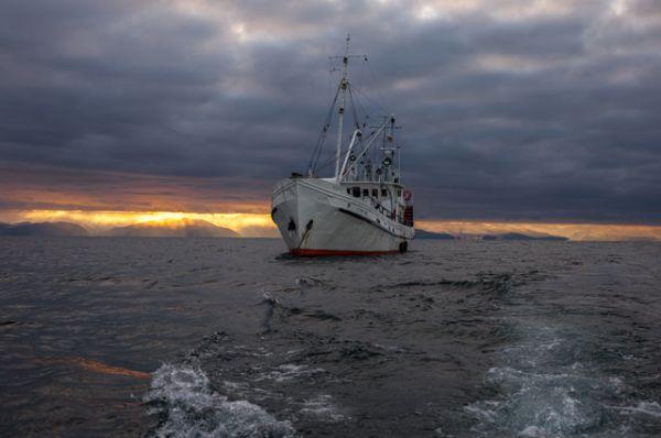 Проведены исследования в Северобайкальске, Слюдянском районе, в Чивыркуйском заливе и на Малом Море. Ситуация везде похожая.