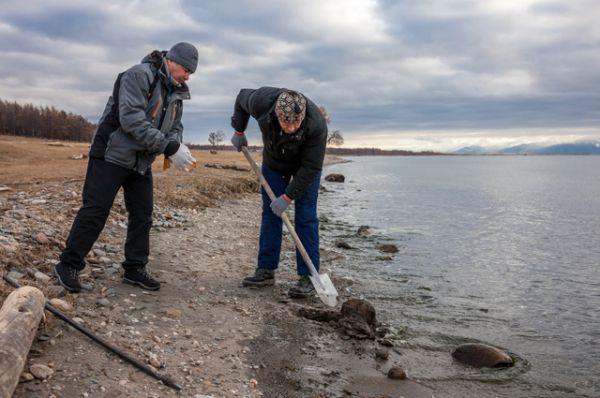 Огромные слои отмирающей водоросли засоряют пляжи и берега.