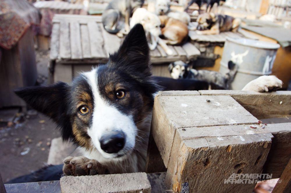 В каждой паре собачьих глаз - надежда на то, что найдётся хозяин...