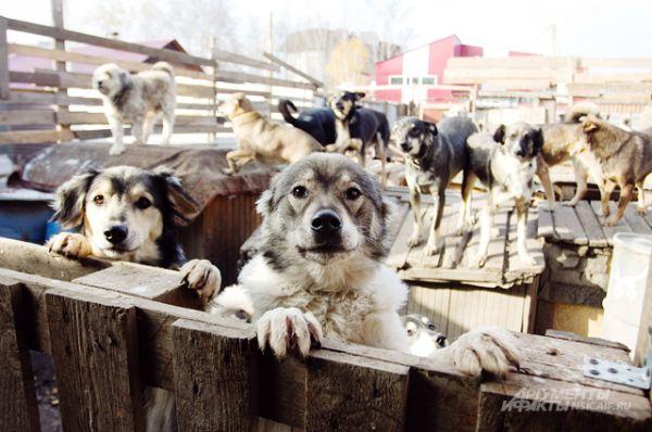 66 собак остались без крова и каждый день мёрзнут под открытым небом.
