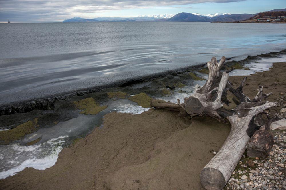 Сейчас берега Байкала покрыты толстым слоем гниющей водоросли.