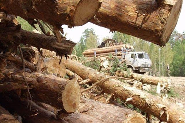 В ходе операции «Лес» изъято 29 единиц техники и 26 бензопил.