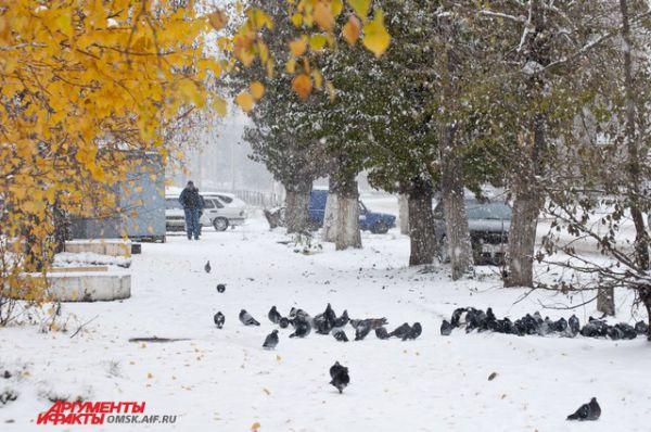 В Омске выпал снег.