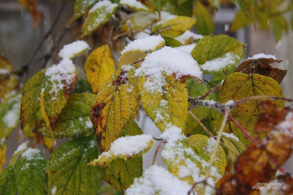 Осень сменяется зимой
