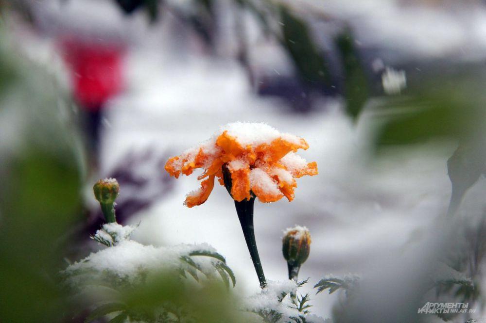 Городские клумбы замело снегом