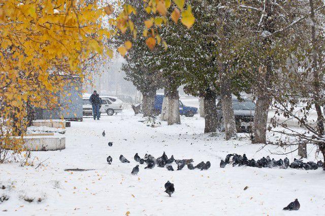 В Омске выпал первый снег.
