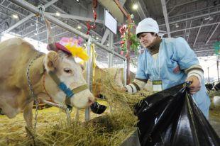 Россельхознадзор вводит запрет на импорт говяжьих субпродуктов из Евросоюза