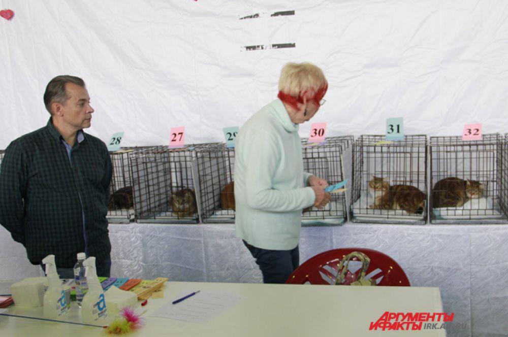 Жюри строго оценивало кошек по только им известным, но очень строгим критериям.