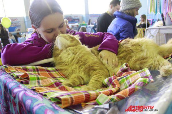 Продемонстрировали коты и свою нежную любовь к хозяевам.