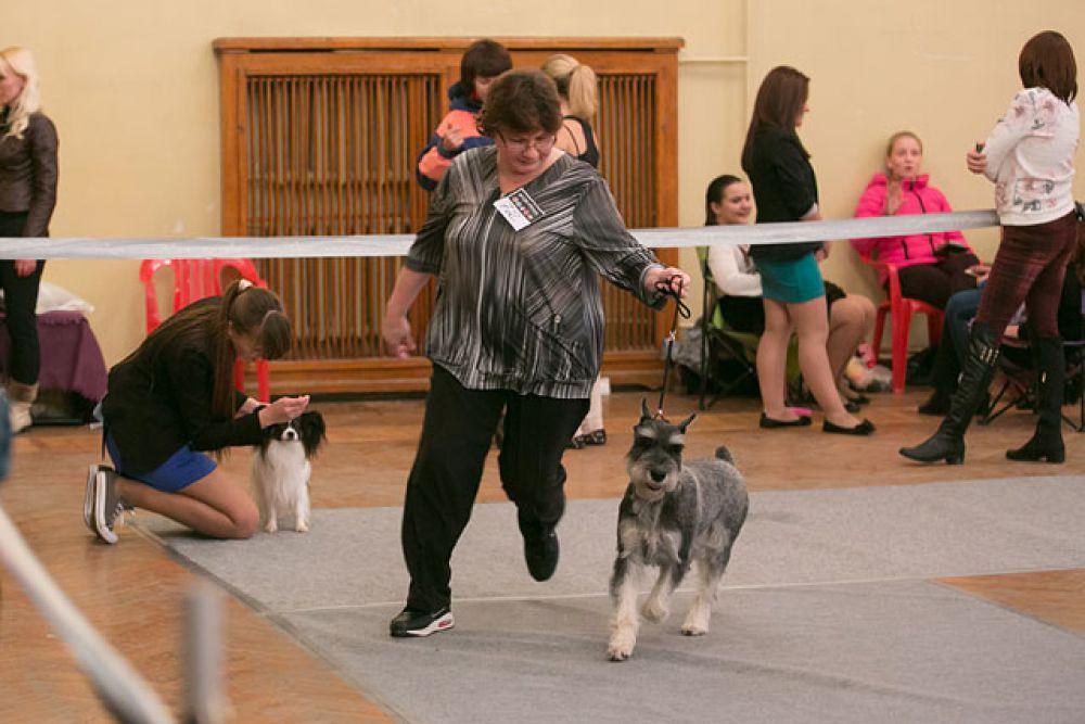 Жюри оценивало внешний вид собак и физические способности