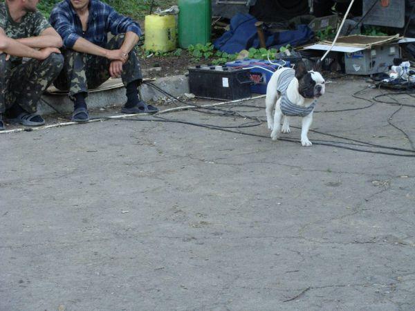 Коты и собаки в зоне АТО