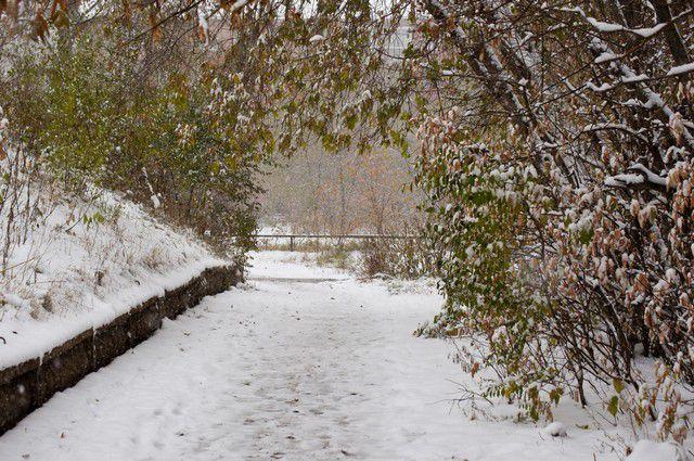 Деревья в Омске будут садить несмотря на зиму.