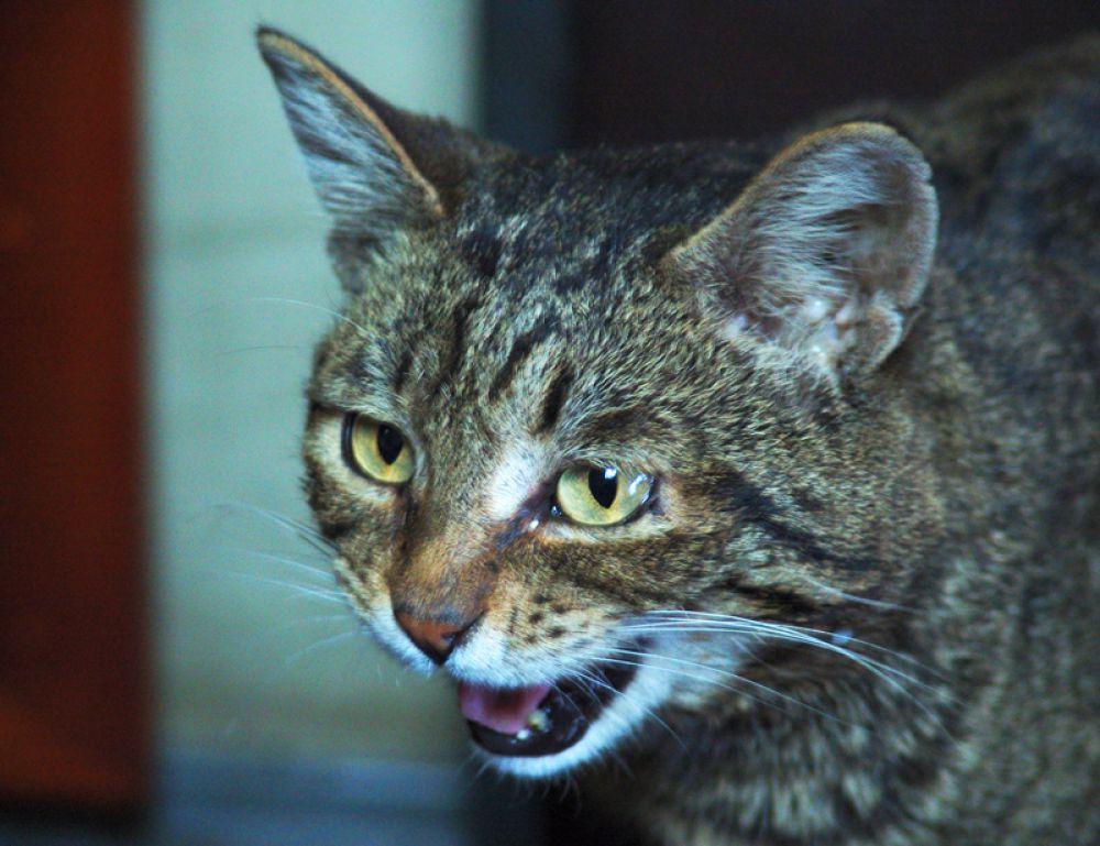 Верный помощник кузнецов - кот Плинтус