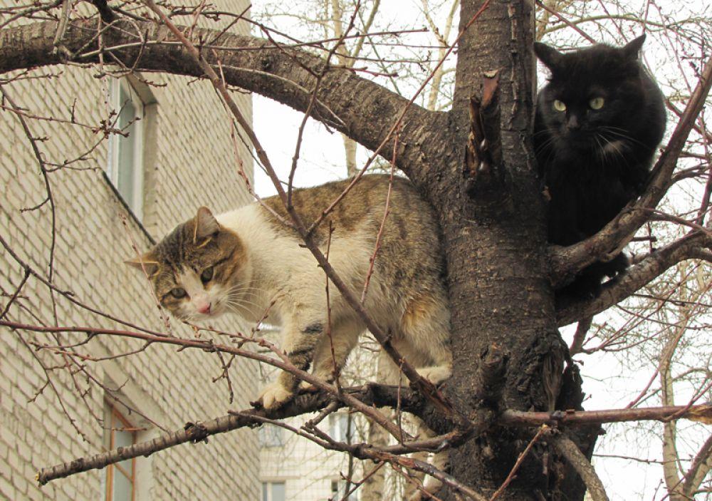 Весна! Коты прилетели