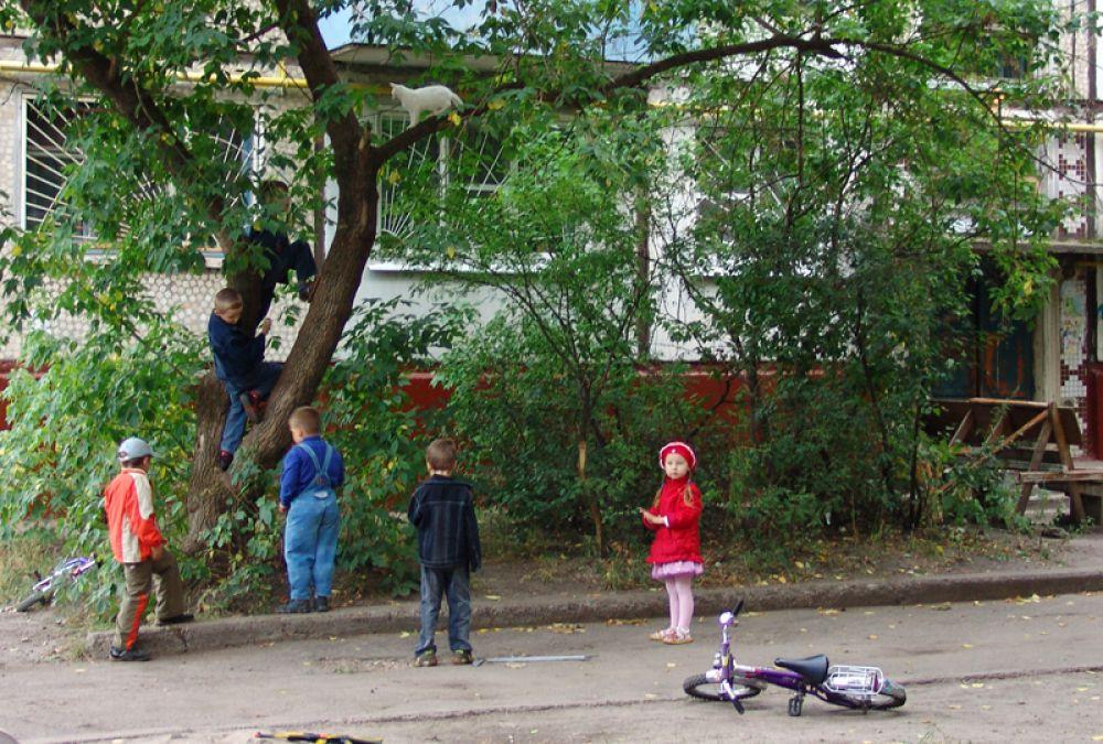 Операция по снятию кота с дерева - дворовый МЧС