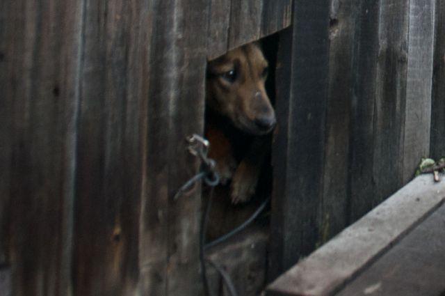 Бродячая собака обрела новый дом.