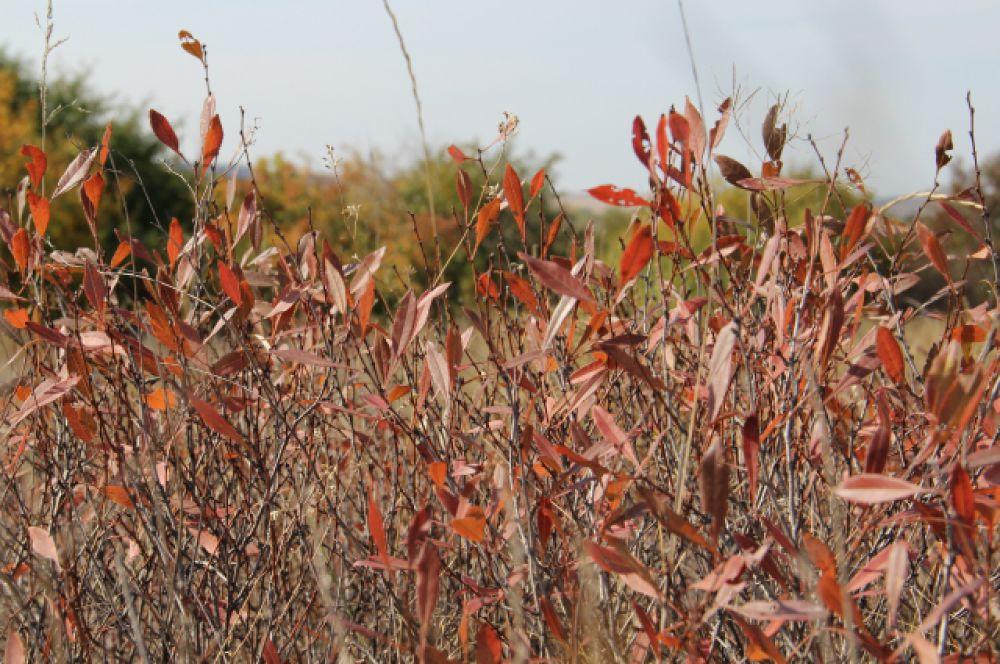 «Осень ранняя. Падают листья. Осторожно ступайте в траву. Каждый лист — это мордочка лисья... Вот земля, на которой живу...» Б. Окуджава