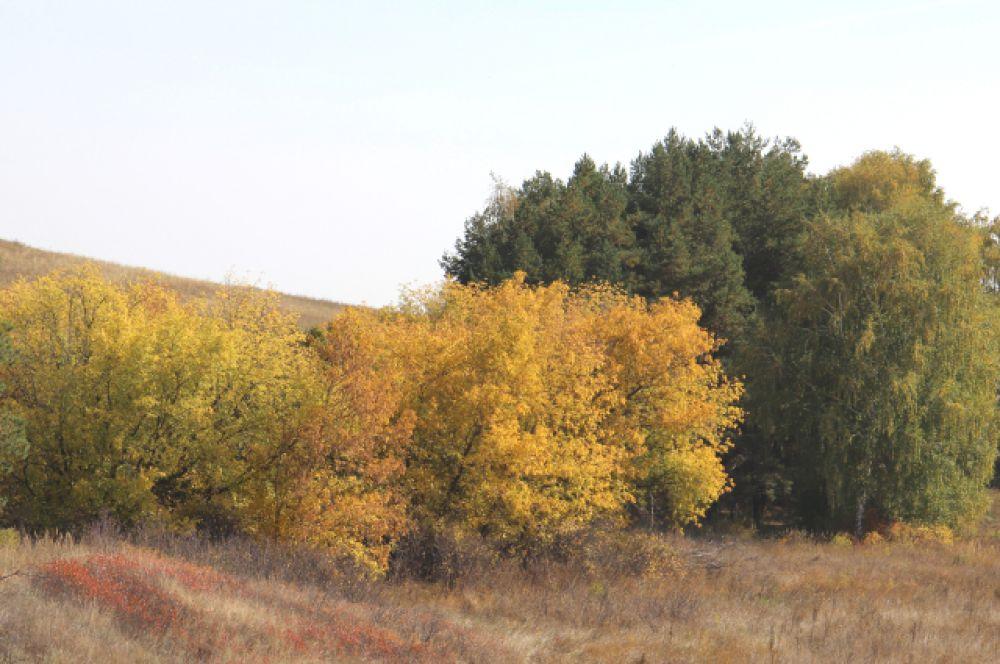 ...в багрец и в золото одетые леса, в их сенях ветра шум и свежее дыханье...