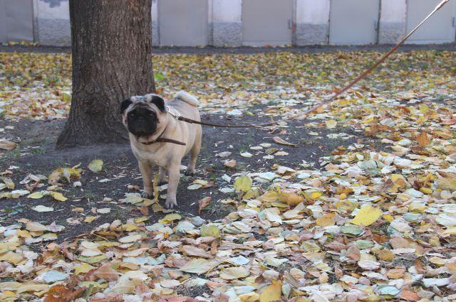 Осень радует красками и огорчает падением температуры.