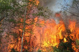 На Камчатке количество лесных пожаров снизилось в два раза