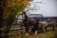 Лошадь на селе