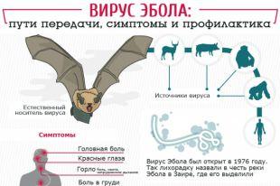 Вирус Эбола: симптомы, пути передачи и профилактика