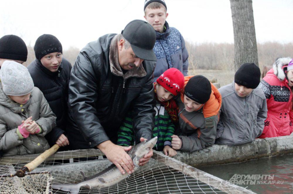 После знакомства с детьми рыба покинула бассейны через специальные затворы. Такую технологию выпуска осетра в реку - при которой не надо пользоваться сачками - применили впервые, хотя программу воплощают уже не первый год.