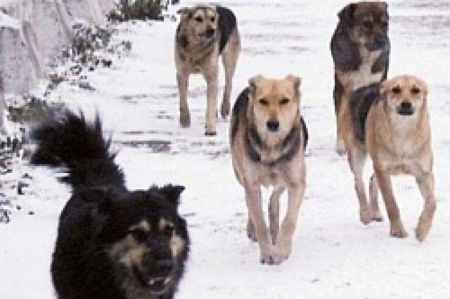 Спецавтобаза за месяц отловила в Екатеринбурге 526 бродячих собак