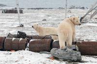Пора наводить порядок в Арктике, чтобы мишки не обижались.