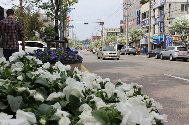 Обычная корейская улица. Цветы никто не рвёт.