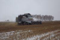 Урожай убирали прямо с заснеженных полей.