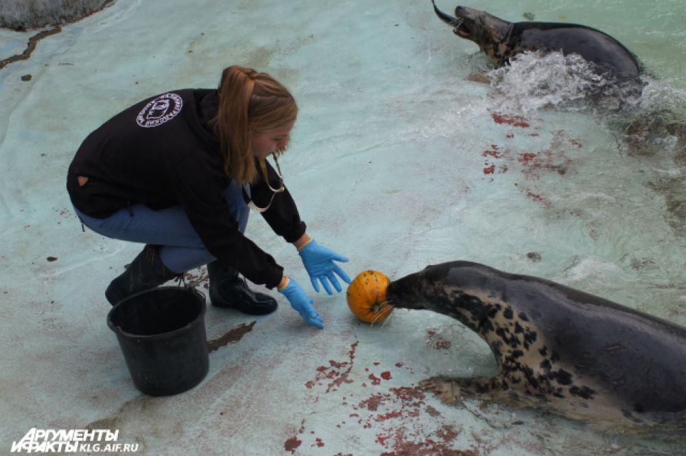 Первый раз блюдами из тыкв угостили тюленей.