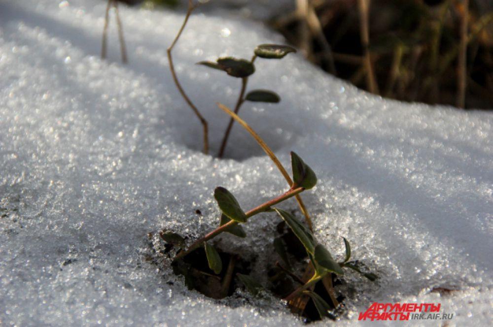 Часто здесь одновременно можно одновременно увидеть и снег и зелень.