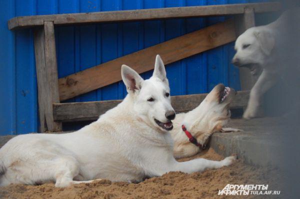 Отдых для служебных собак тоже важен