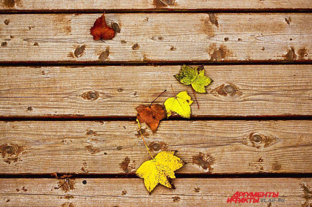 Последние слетевшие листья.
