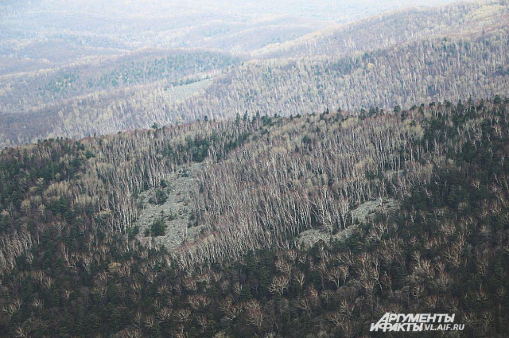 Поздней осенью лес становится совсем серым.