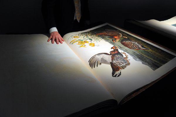 «Птицы Америки» Джона Джеймса Одюбона – самая дорогая печатная книга. Ее цена – $11,5 млн. Из 200 экземпляров первого издания, выпущенной в США в 1827-1838 годах книги, до наших дней дошли только 119. Лишь 11 из них находятся в частных руках, а остальные — в музеях по всему миру. С учетом того, что каждый полный том включает 435 вручную раскрашенных оттисков гравюр размером 90 на 60 см, на которых птицы изображены в натуральную величину, цена одного экземпляра, проданного 7 декабря 2010 года в Лондоне аукционным домом Sotheby's, не кажется удивительной.