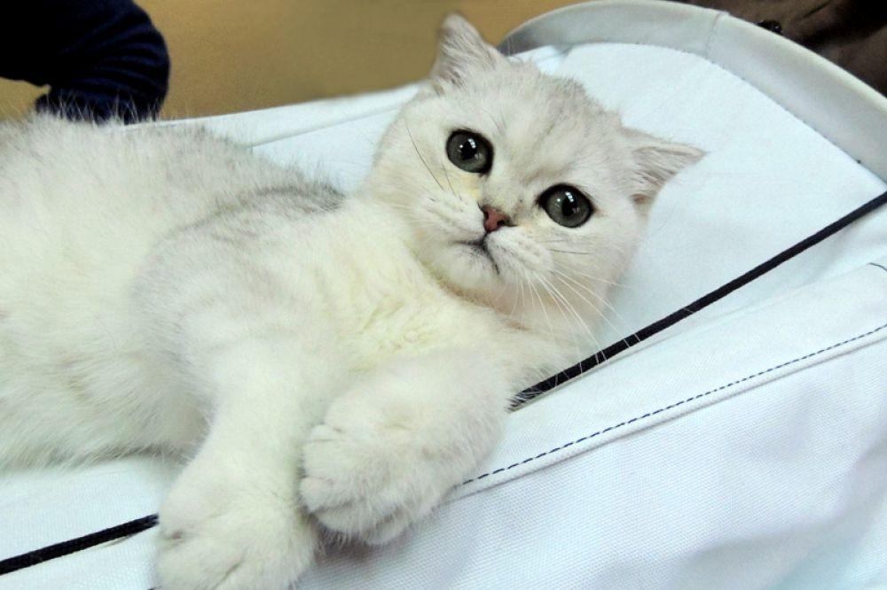 Может быть, именно этот котенок ждет друзей?