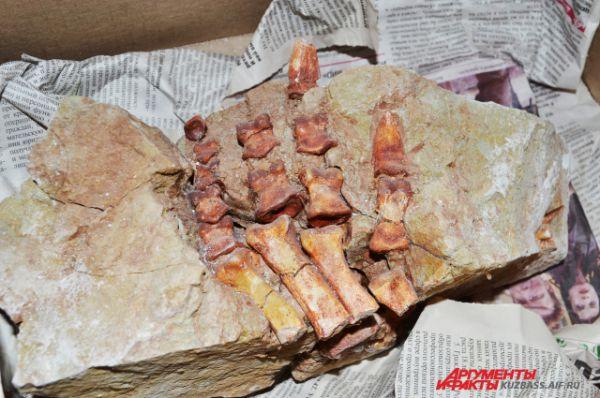 Шестаковская глина законсервировала древних ящеров.