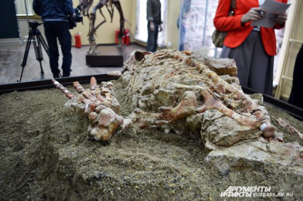 Очевидно, что погиб молодой динозавр под слоем обрушившейся глины от множественных переломов.