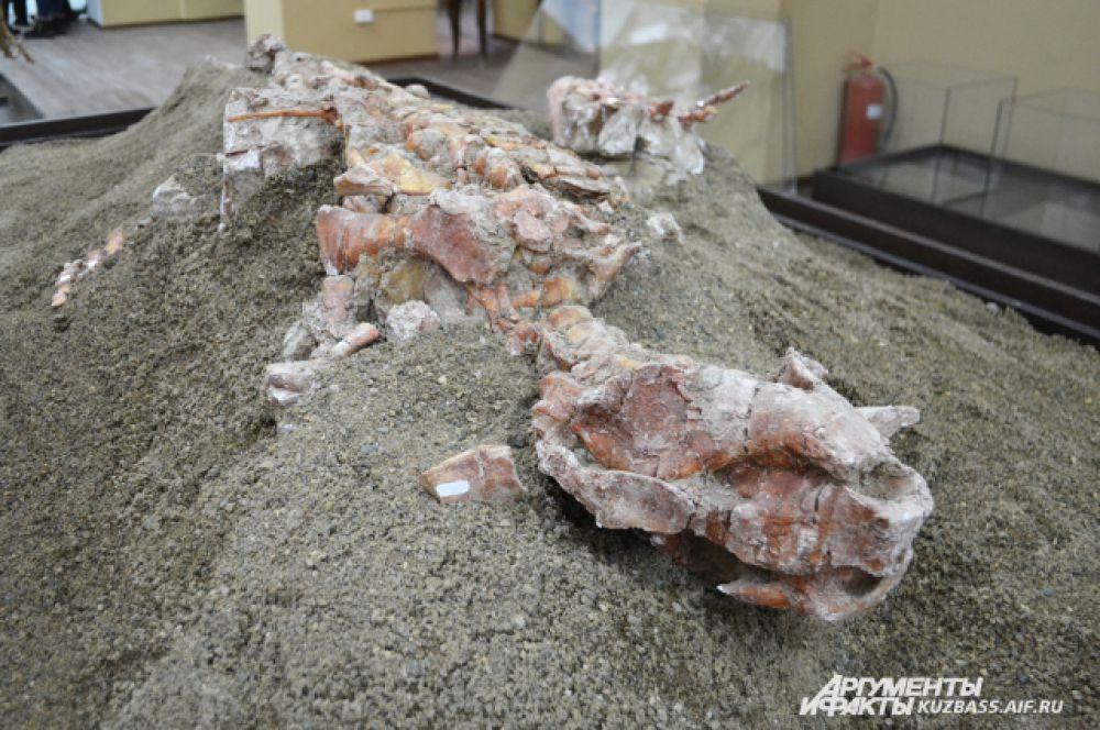Его, как и остальные скелеты, кузбасские учёные обнаружили на раскопках в окрестностях села Шестаково весной и летом 2014 года.